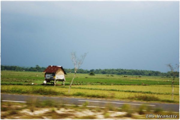 The green field of Madura