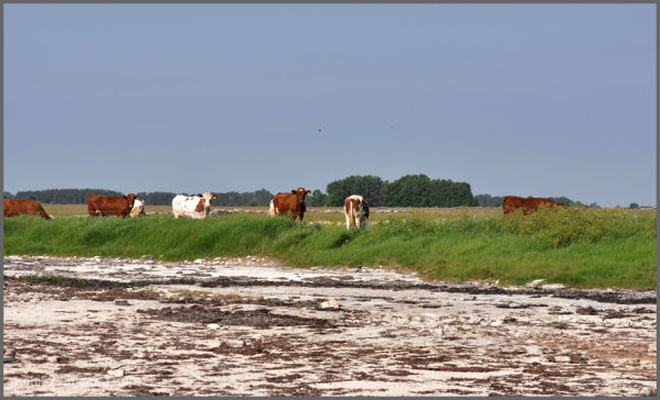 Alby sjömarker, Öland