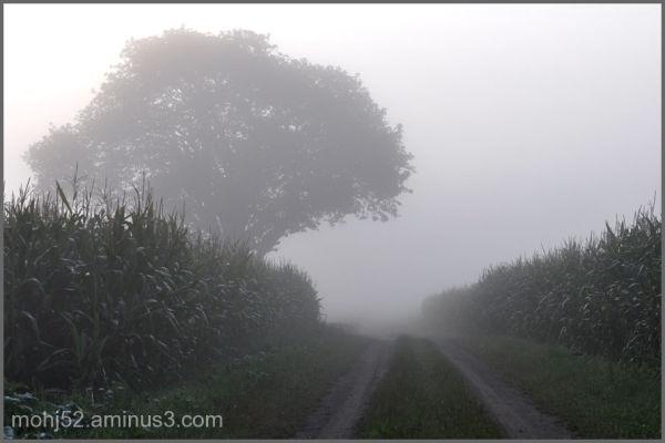 Misty morning in the corn fields, Risinge, Öland