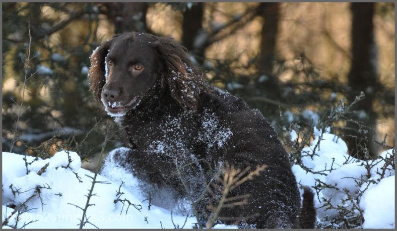 Max loves snow, Lilla Frö, Öland