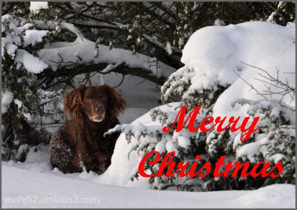 Merry Christmas, Öland