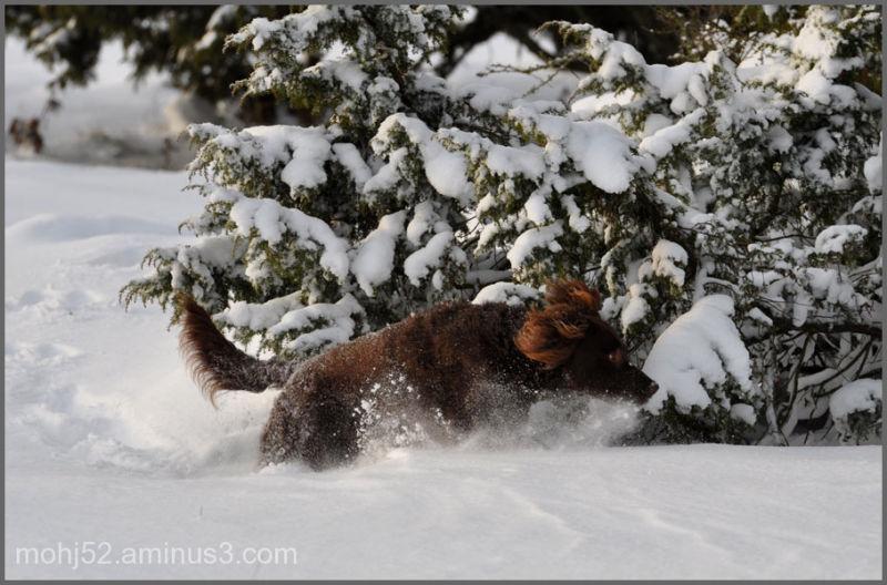 Max goes crazy in the snow, Risingehamn