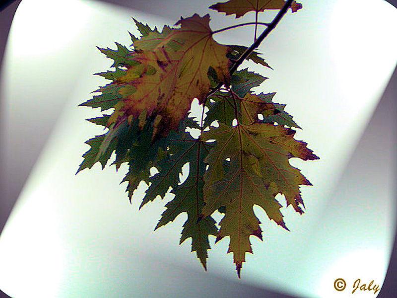 Une grappe de feuilles automnales