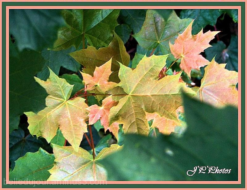 guirlande de feuilles
