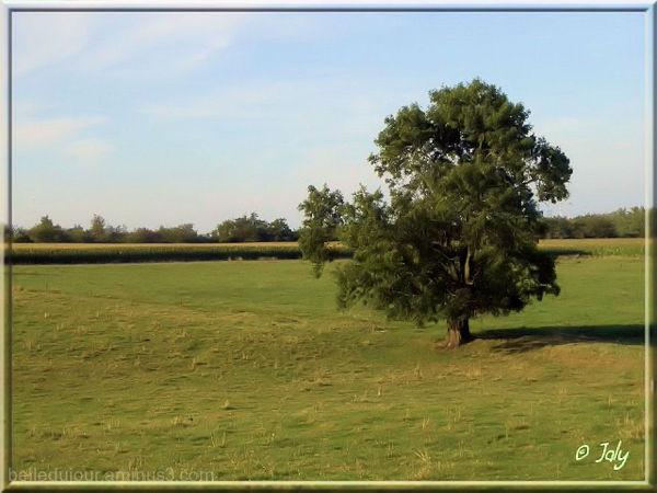 Un arbre seul
