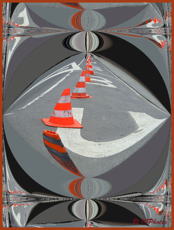 lignée de cônes