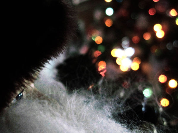santa claus, christmas tree lights, bokeh