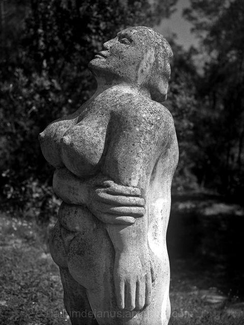Bosc de Can Ginebreda  6 - home dona