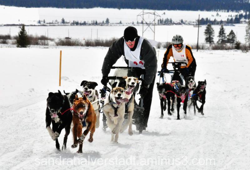 Mt. Elbert Mush dog sled races Leadville CO