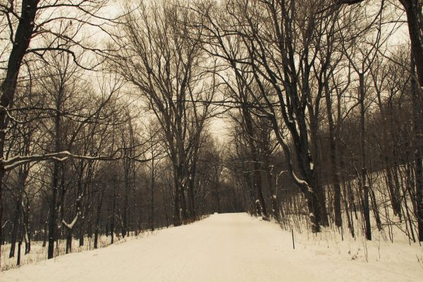 Mont Royal Winter Road