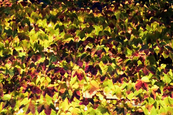Leaves under strange Light