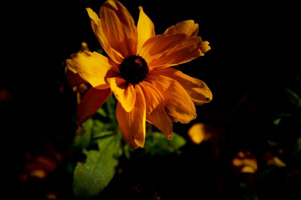 Prime Flower