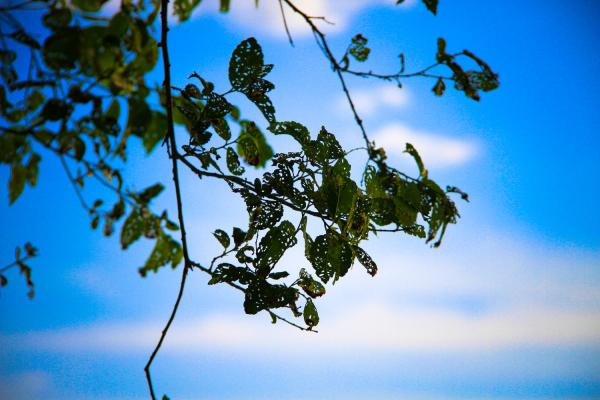 Holes in Leaves