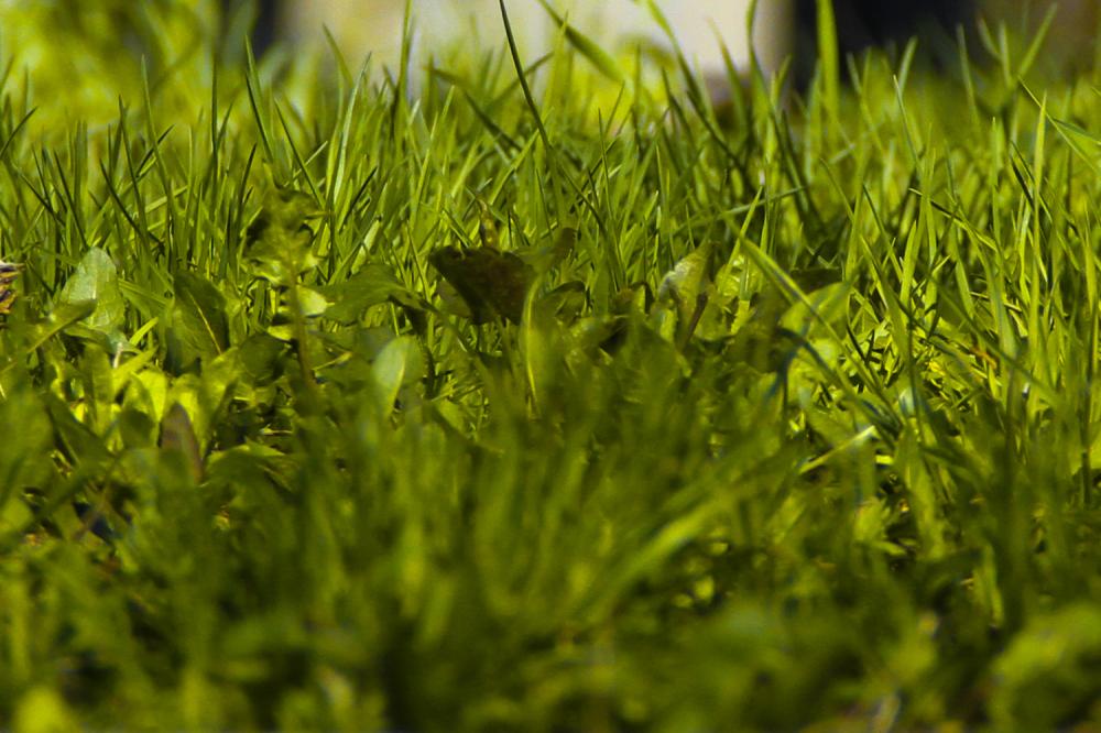 Close Grass