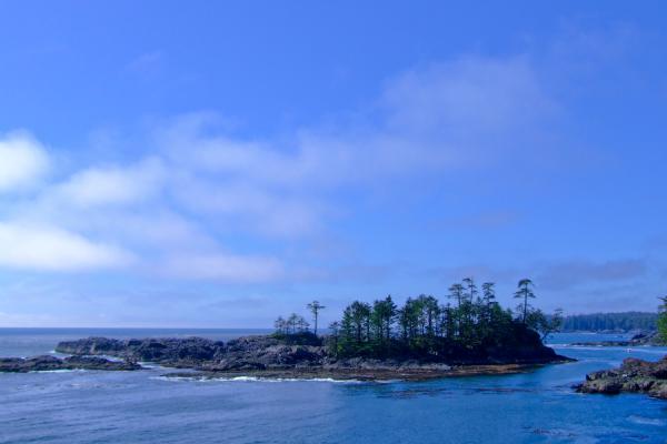 Trees on Island