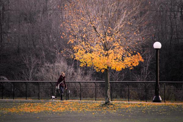 Fall Scene with Girl