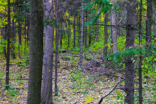 Green Trees in Fall