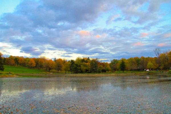 Clouds & Tree Line