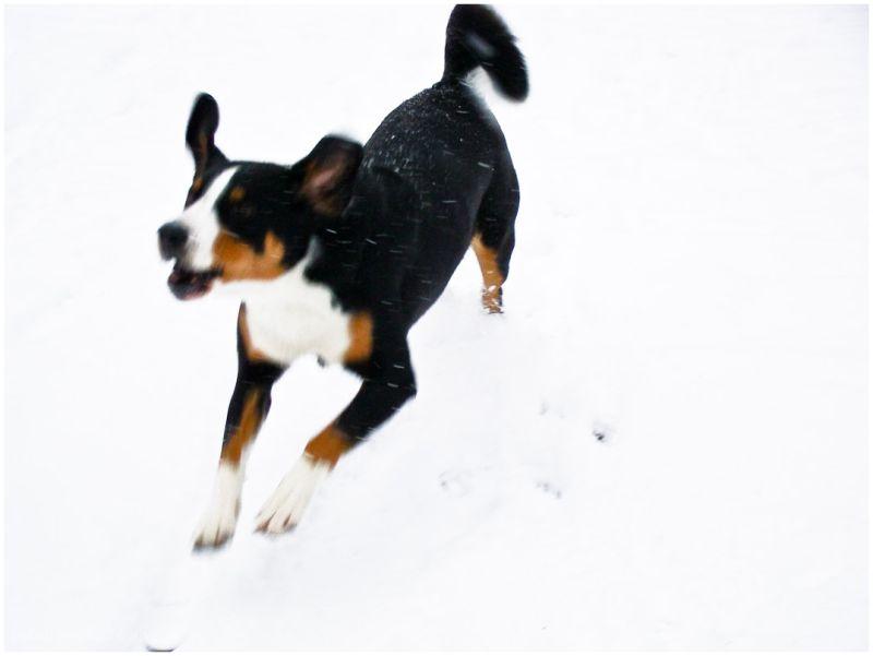 Senna loves snow