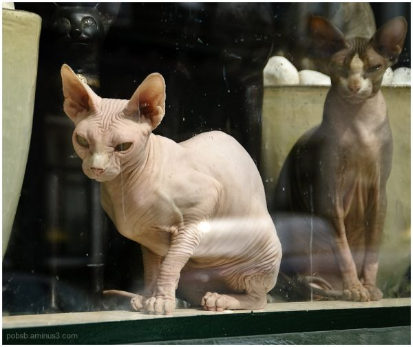Naked Cats