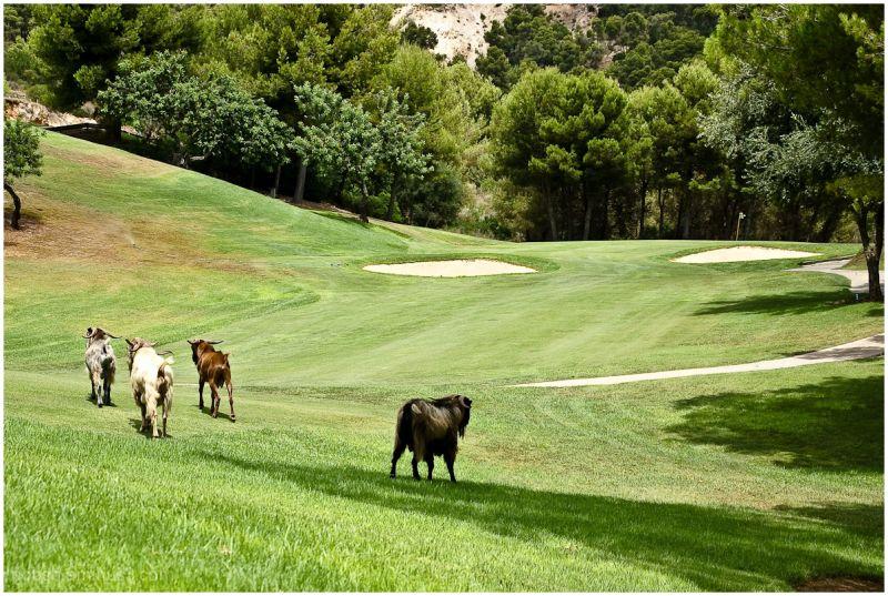 Golf on Majorca -1-