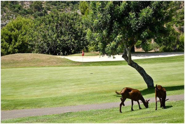 Golf on Majorca -3-