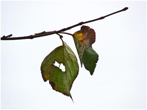 Autumn Leafs 2