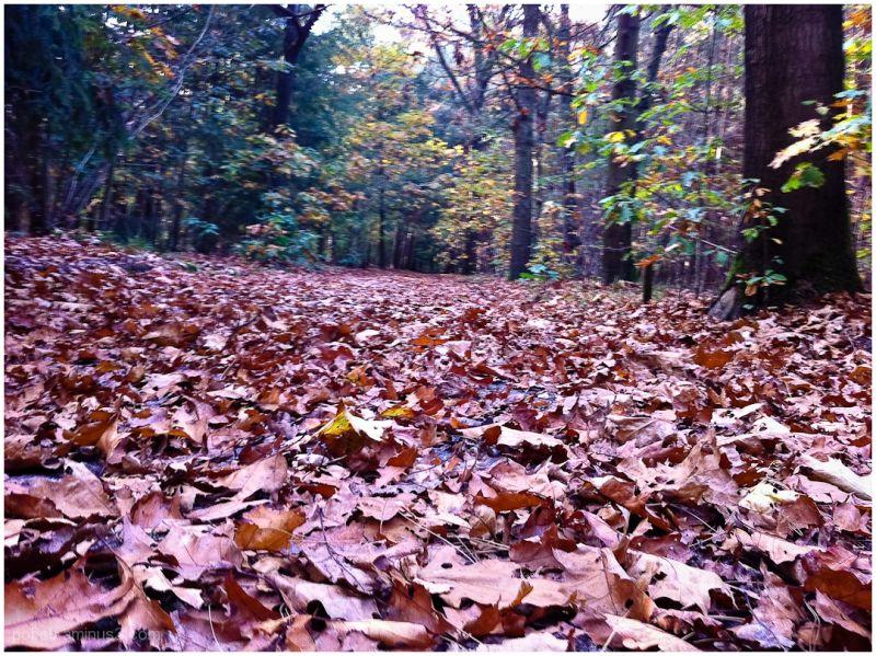 Autumn Leafs 5