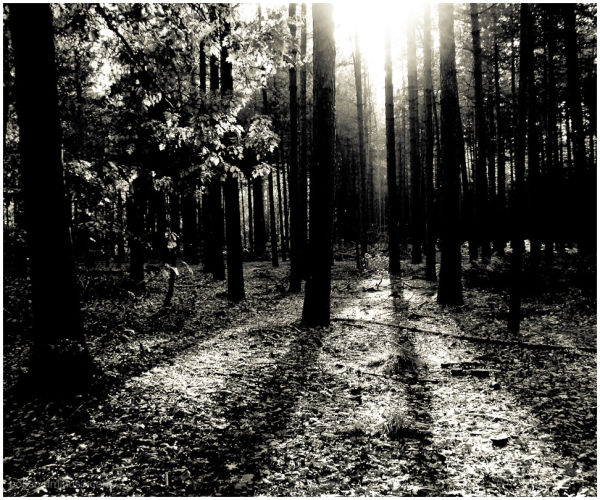 Light in the forest 2