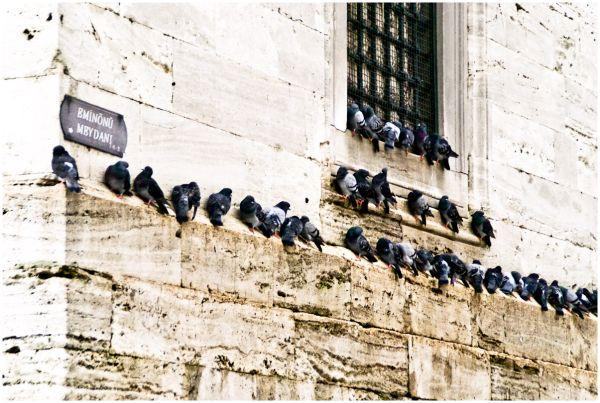 Instanbul - doves