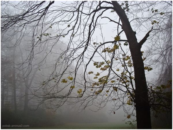Misty walk in the park - part 3
