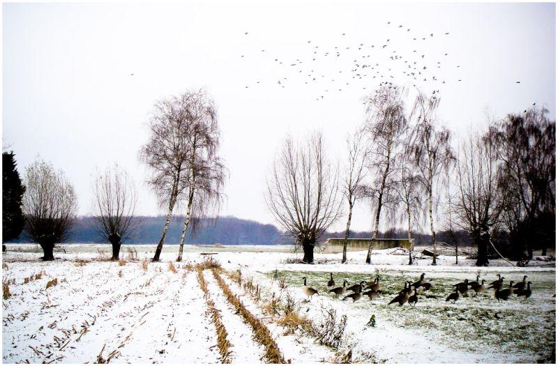 Winterscene 1