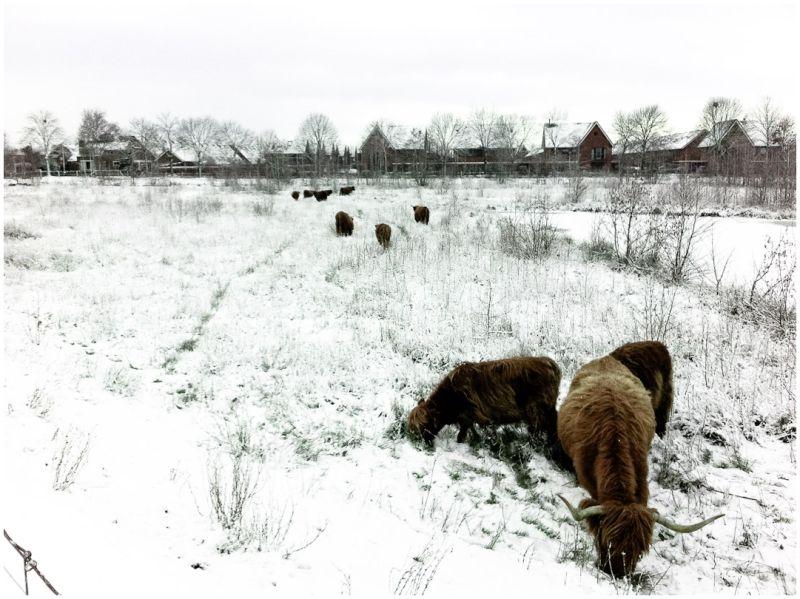 more winter 3