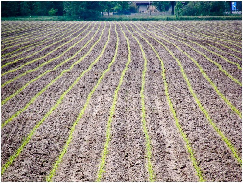 same farmland