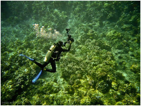 Hawaii : Snorkelling 3