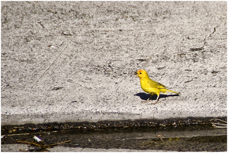 Hawaii : Bird 2
