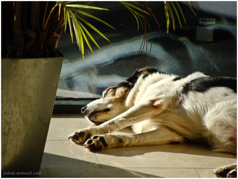 relaxing in the sun