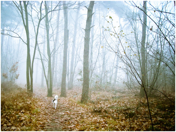 walking the dog 3