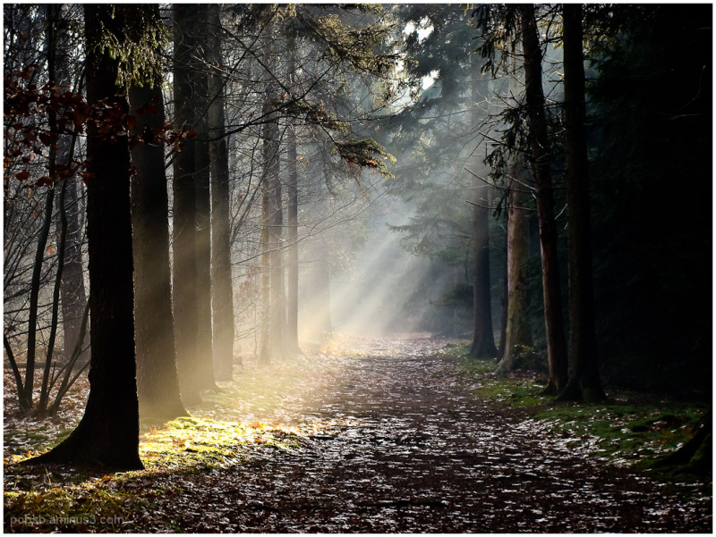 light in the forest 3