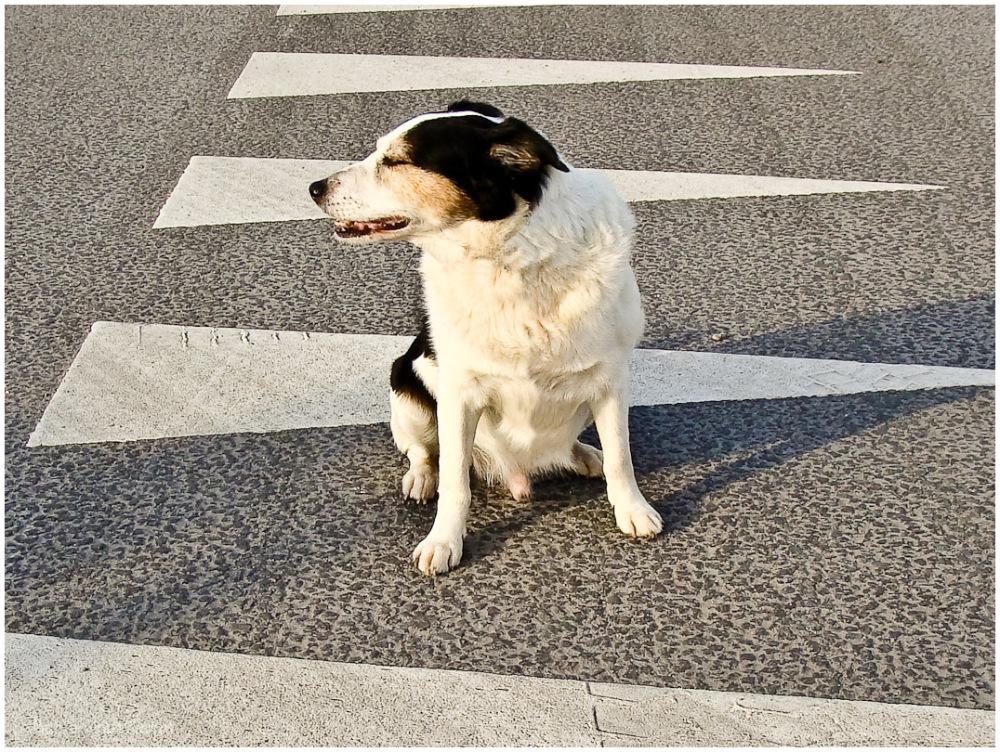 dog in traffic 1