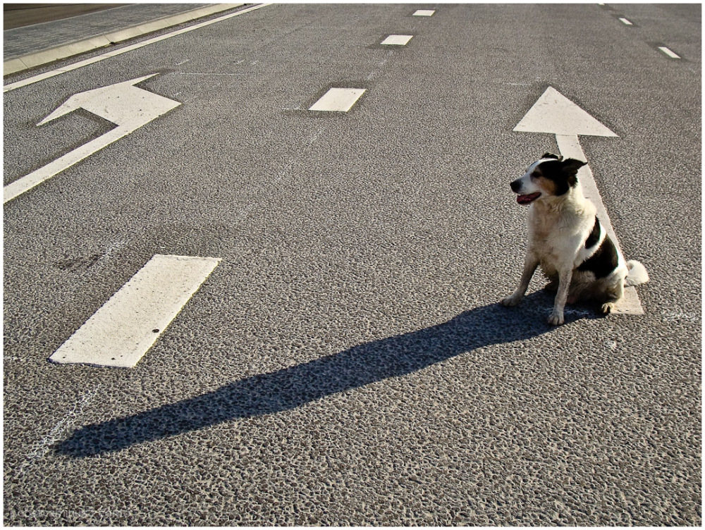 dog in traffic 3