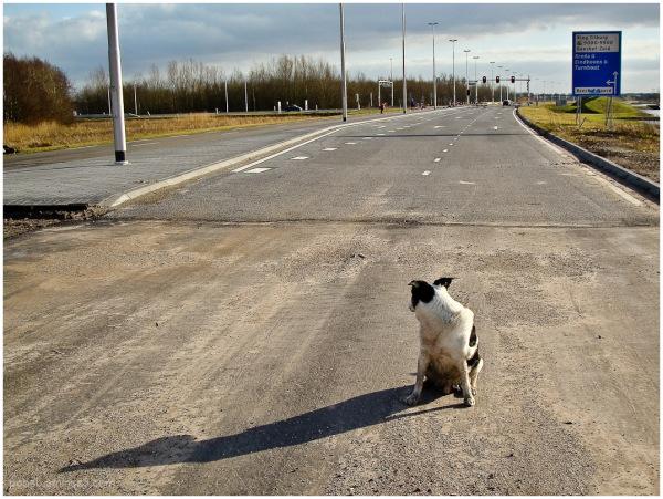 dog in traffic 4