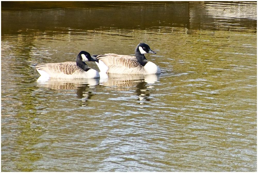 spring couple 4