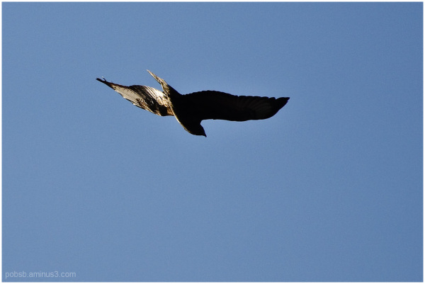 Bird alone 3
