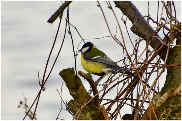 Bird alone 5