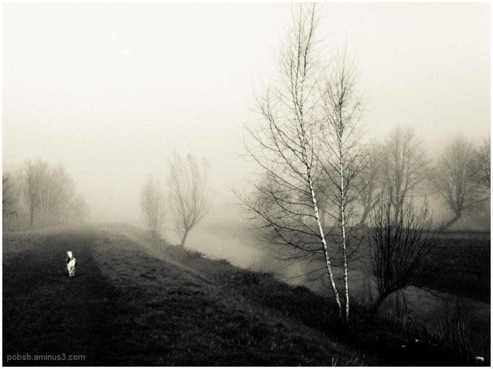 a foggy day 1
