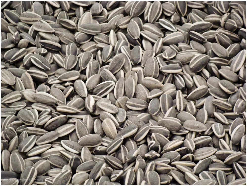 Ai Wei Wei's sunflower seeds