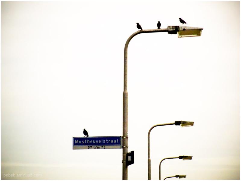 Birds in the neighborhood -2-