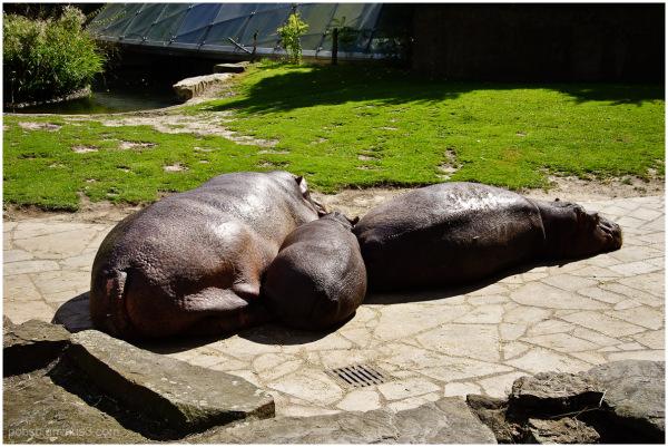 Berliner Zoo 2