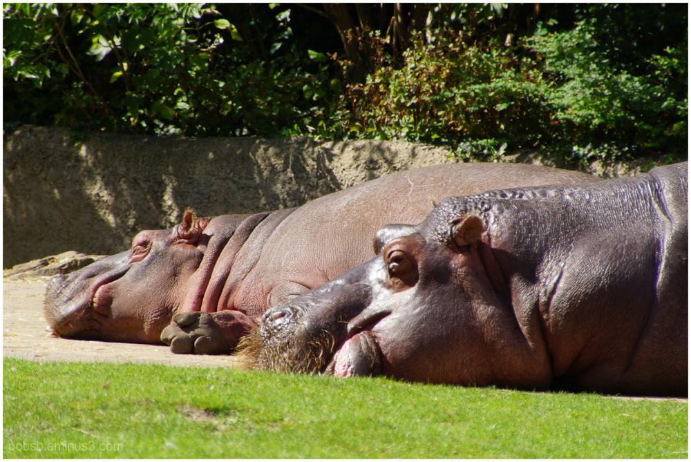 Berliner Zoo 3